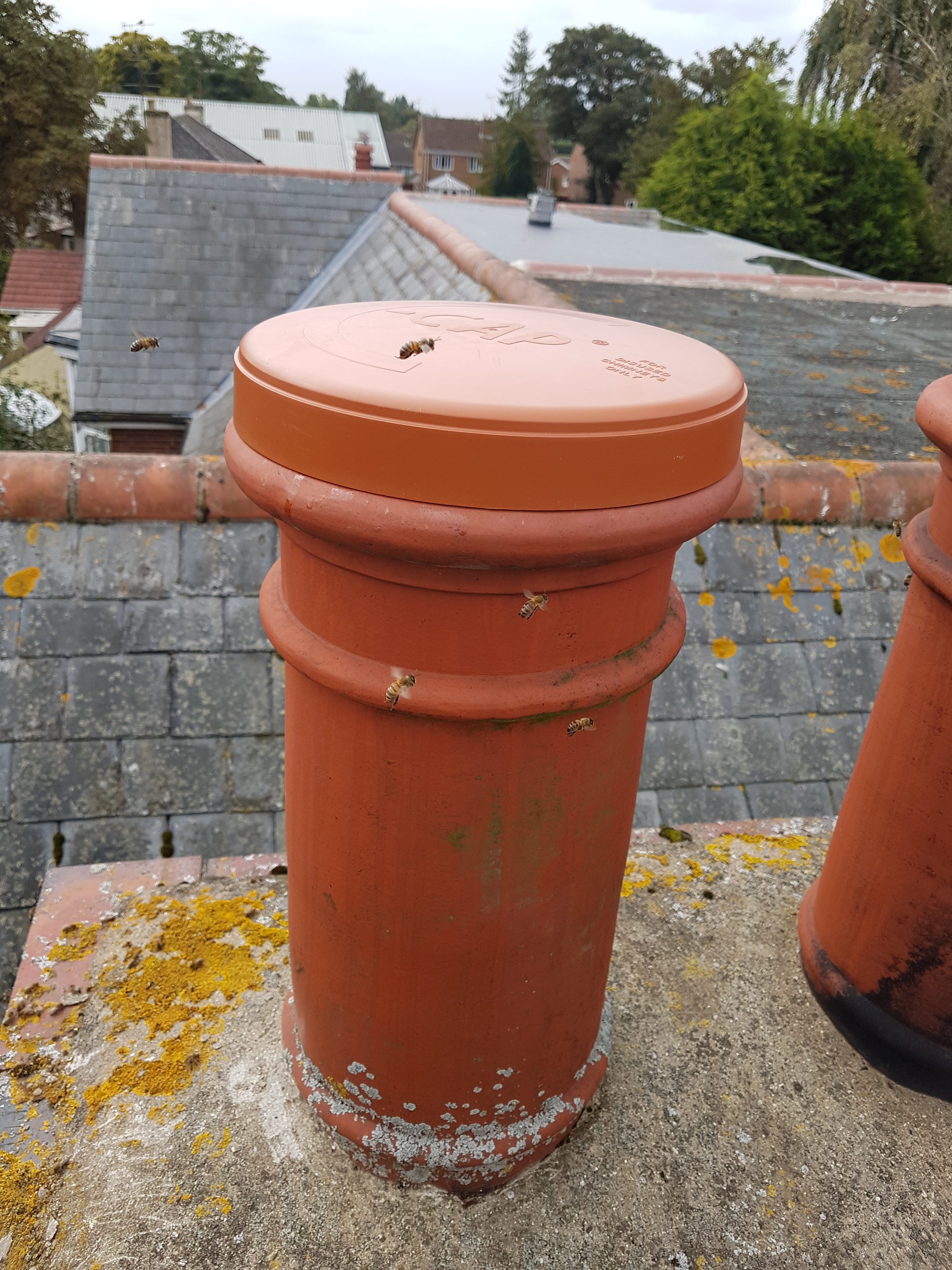 Honey bees chimney removal Lincolnshire.