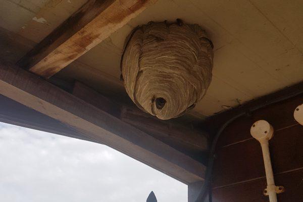 Hornet nest removal service