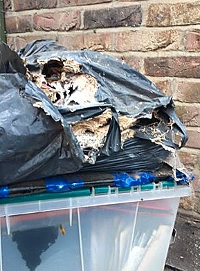 wasp nest inside bin bag in storage area.
