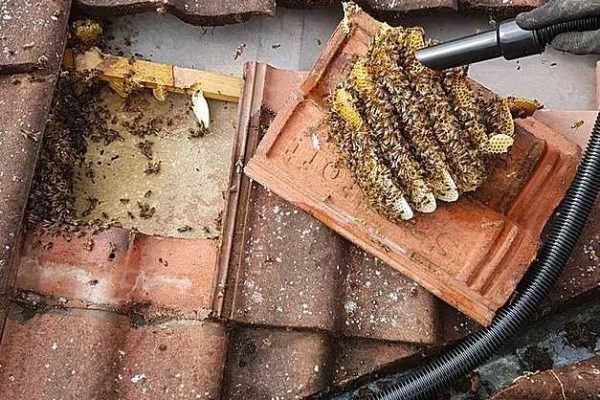 lincolnshire honey bee removal