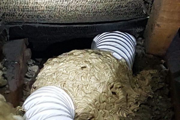 wasp nest inside extractor fan pipe